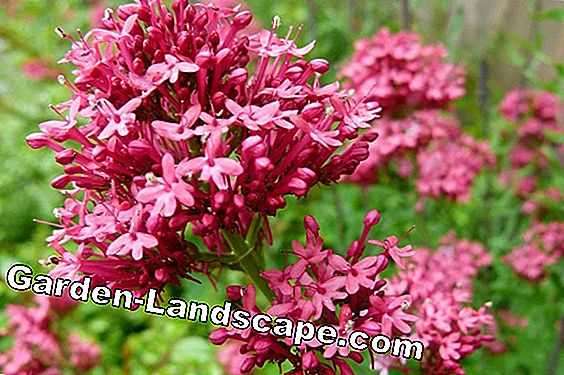 Valerian: Detect and combat diseases and pests