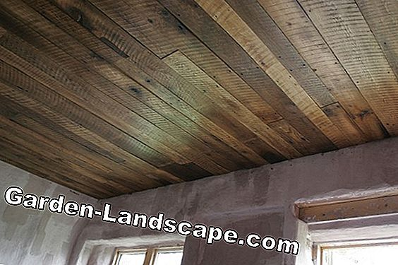 Old wooden ceilings - Should you dress, renovate or remove them?