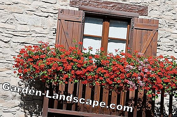 Balcony Flowers: Imaginatively combined