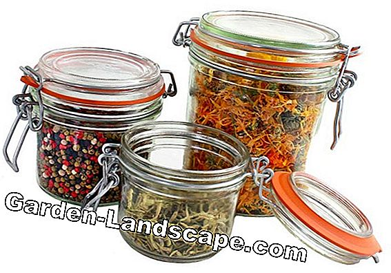 Herbs: Preserve scent and spice properly
