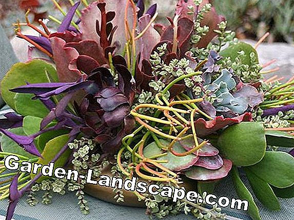 Decorative planting of herb stems