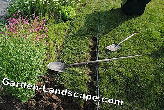 How to get your lawn edge into shape