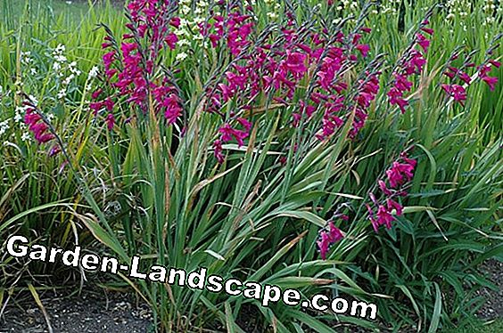 Create flower meadow - flower varieties and care tips