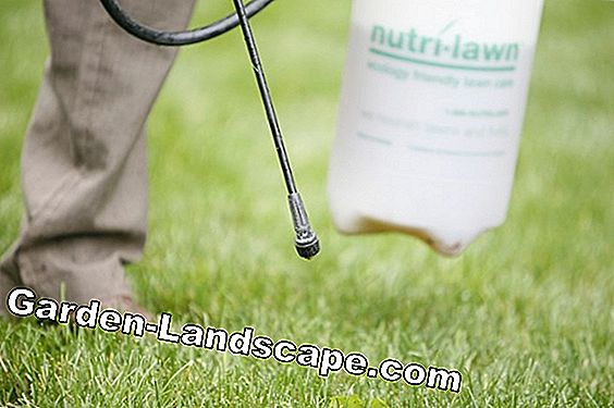How toxic is lawn fertilizer really?