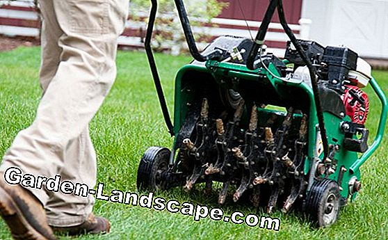 Aerate lawn - Instructions and devices for ventilation