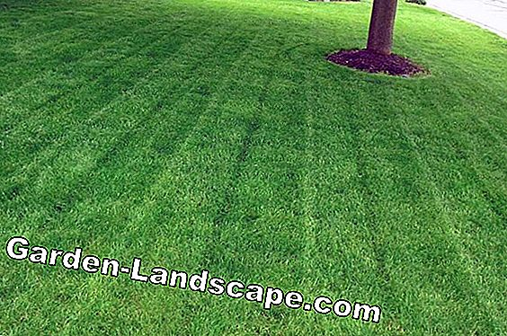 Lawn care in high heat and drought