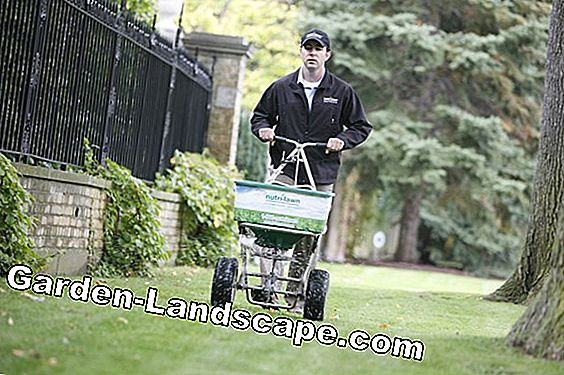 Lawn care in spring - so lime, fertilize and mow properly
