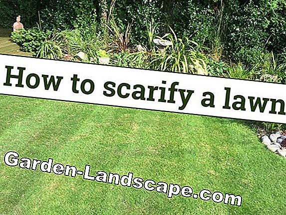 Scarify the lawn - when and how!