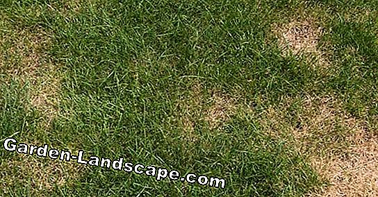 Detect lawn diseases - List of common turf problems