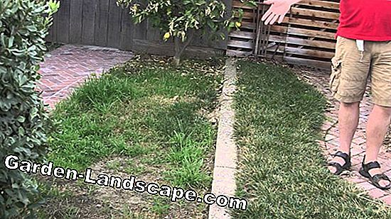 Lawn fertilizer for the spring