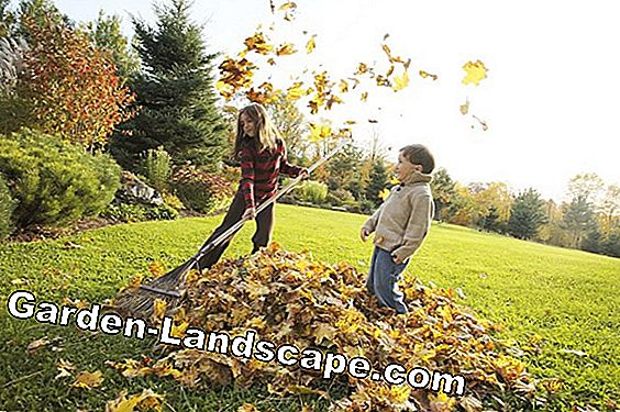 Prepare lawn for the winter - meaningful measures