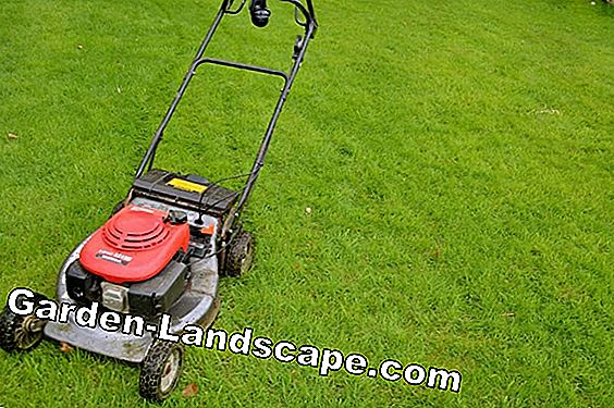 Lawnmowers and tools for lawn care