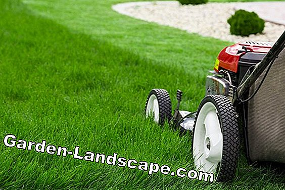 Lawn Mowing: Pay attention to the times