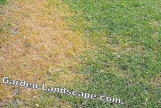 Detect and repair lawn problems