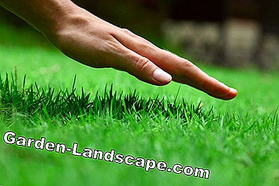 Lawn Seed: It's the right mix