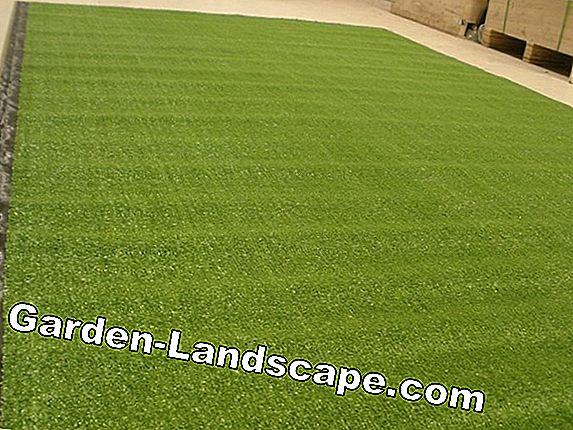 Prices for turf grass - turf