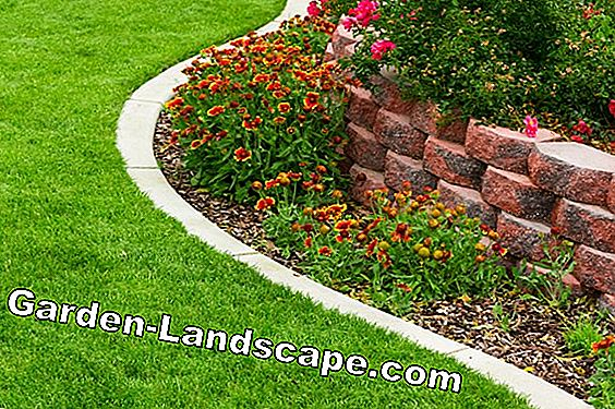 Professional tips for lawn care