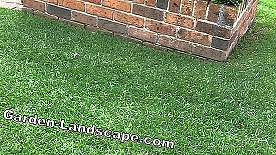 The right care for the lawn