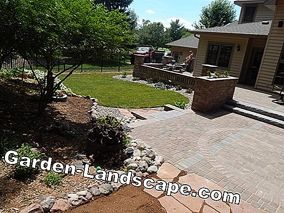 Create and maintain shade lawn