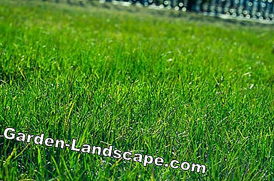 Which types of lawn are there?