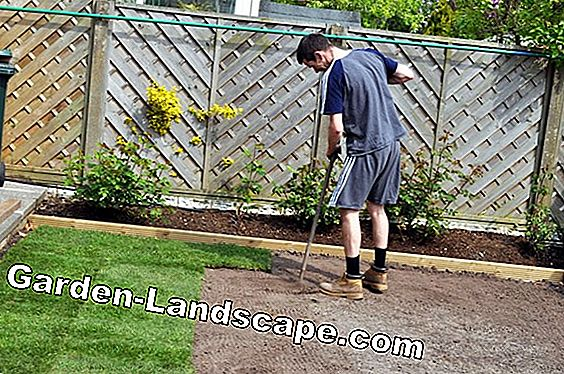 When should you lay turf? How to do it