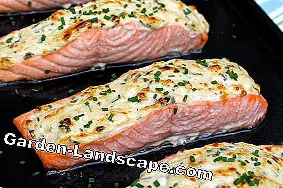 Baked salmon with horseradish crust