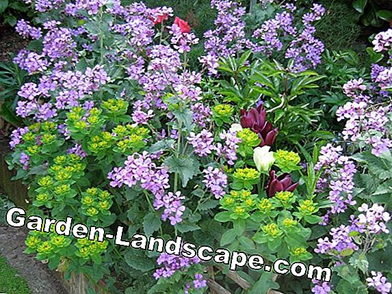 Flowering beds - 365 days of garden happiness