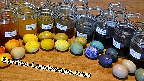 Eggs color with natural materials