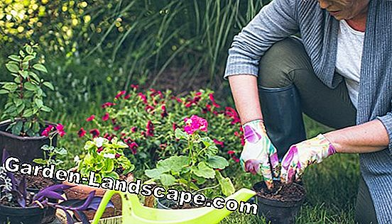 Fit and healthy by gardening