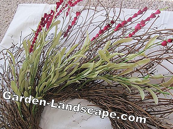 Make flower wreath from willow branches yourself