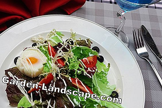 Fried mozzarella with sage and salad