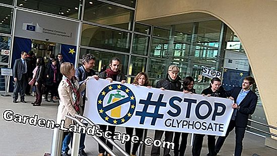 Glyphosate approved for another five years