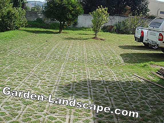 Lawn paving from Substral