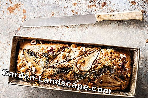 Nut bread with sage