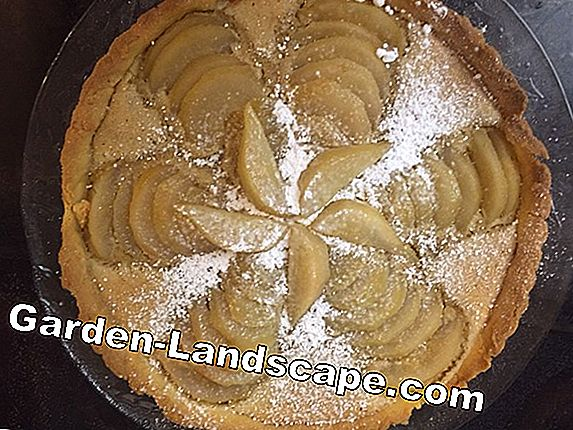 Pear almond tart with powdered sugar