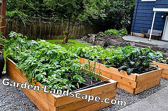 Raised bed gardening - month after month