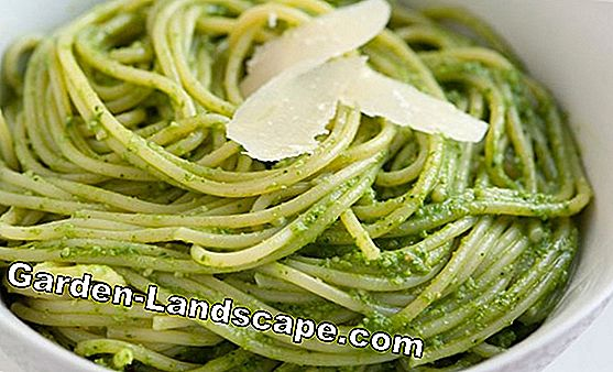 Spaghetti with herb and walnut pesto