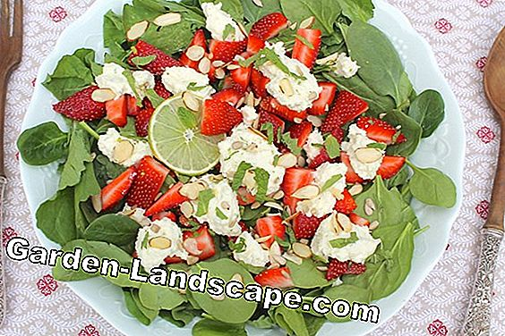 Strawberry and asparagus salad with feta