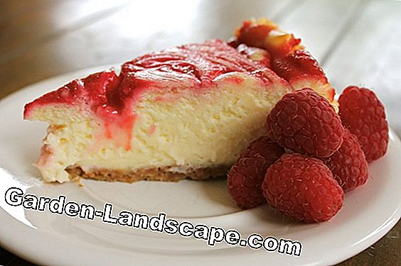 Vanilla cheesecake with raspberries and raspberry sauce