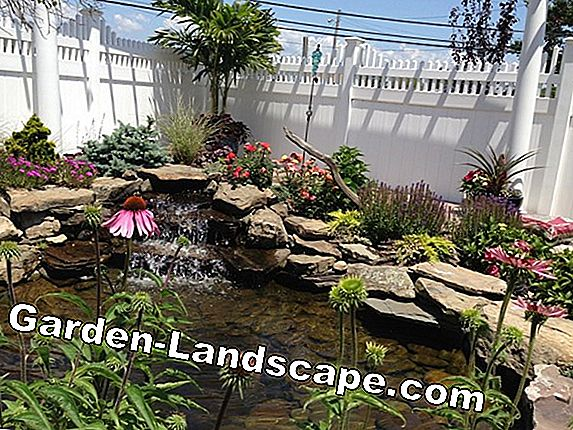 How to create a mini pond properly