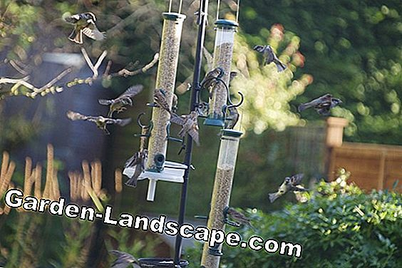 Set up bird feeders for winter feeding