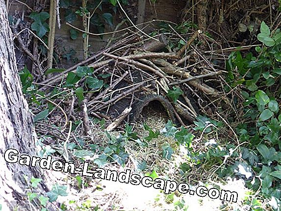 Hedgehog house - where hedgehogs like to hibernate