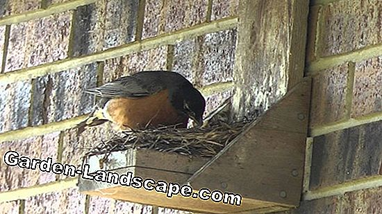 Hang bird nest boxes properly