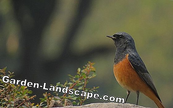 Redstart - build a profile and nesting box
