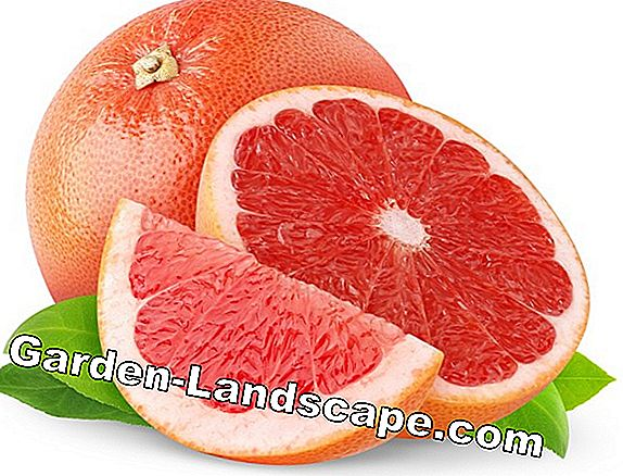 Cutting soft fruit - care cut
