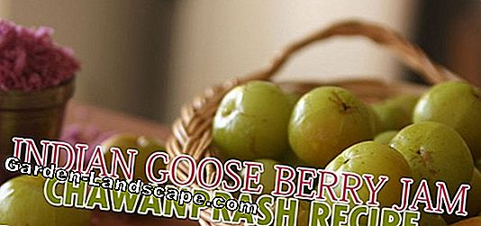 Make gooseberry jam yourself
