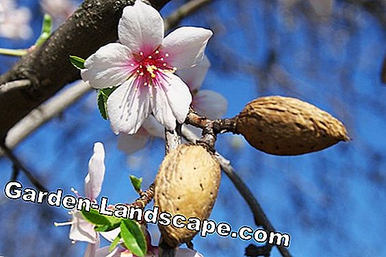 Pests and diseases on fruit trees