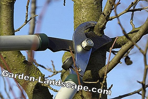 Cutting the Plum Tree - Instructions and Timing