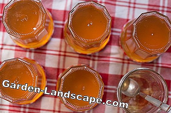 Simple recipe for quince jelly