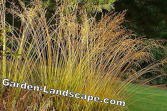 Ornamental grasses: Magnificent stalks